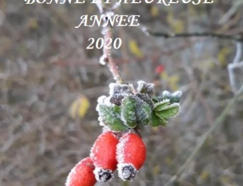 Une nouvelle année ……